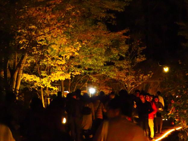 東山動植物園 紅葉ライトアップ(2019年11月17日)- 18