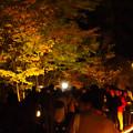 Photos: 東山動植物園 紅葉ライトアップ(2019年11月17日)- 18