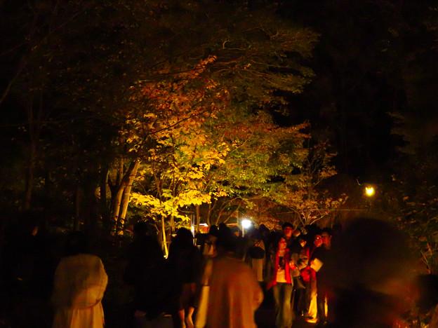東山動植物園 紅葉ライトアップ(2019年11月17日)- 19