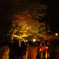 Photos: 東山動植物園 紅葉ライトアップ(2019年11月17日)- 19