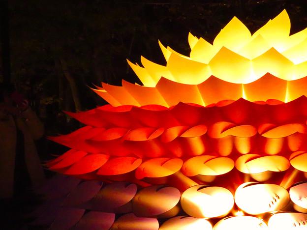 東山動植物園 紅葉ライトアップ(2019年11月17日)- 22:華のイルミネーション