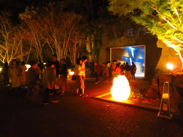 東山動植物園 紅葉ライトアップ(2019年11月17日)- 24