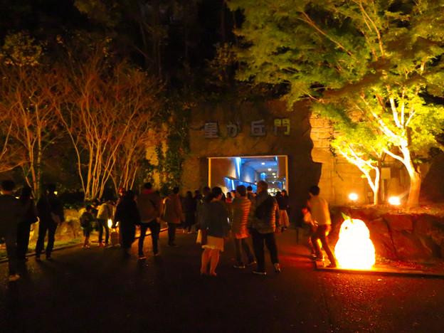 東山動植物園 紅葉ライトアップ(2019年11月17日)- 25