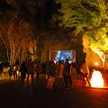 Photos: 東山動植物園 紅葉ライトアップ(2019年11月17日)- 25
