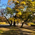 Photos: 落合公園:紅葉した木と半球型のオブジェ - 2