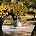 Photos: 落合公園:紅葉した木と半球型のオブジェ - 4
