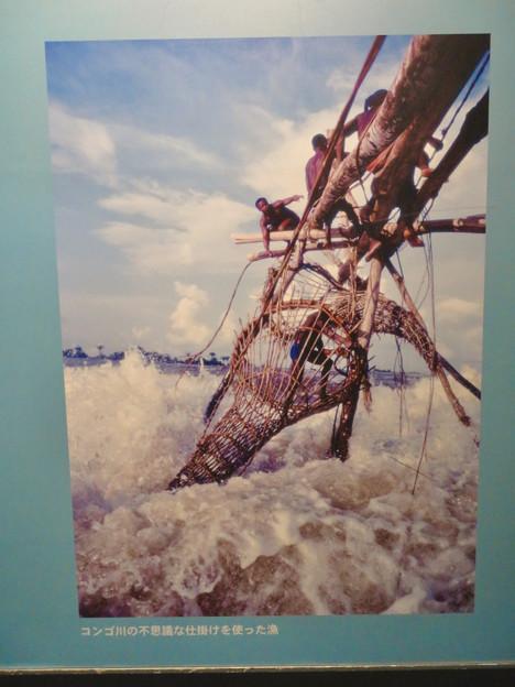 アクア・トトぎふ No - 180:コンゴ川で行われてる独特の漁法