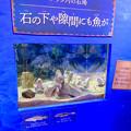 Photos: アクア・トトぎふ No - 226:石の下や隙間に隠れてた魚