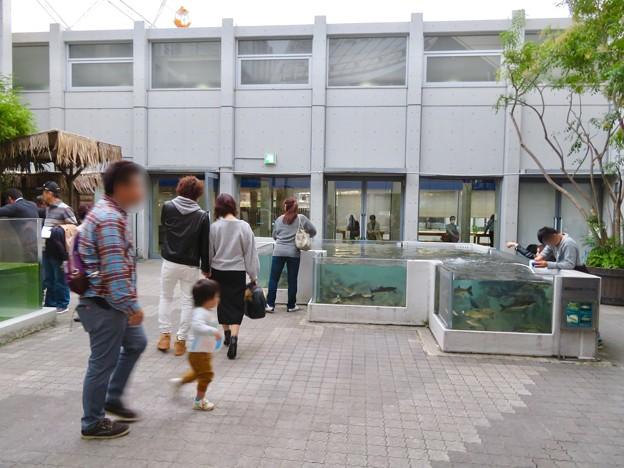 アクア・トトぎふ No - 231:1階の中庭