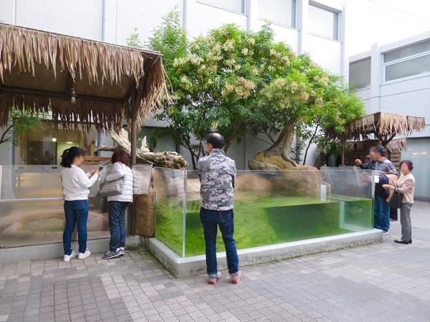 アクア・トトぎふ No - 232:カピバラ舎