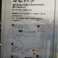 アクア・トトぎふ No - 236:カピバラの説明