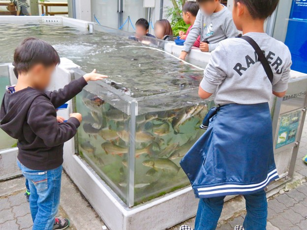 アクア・トトぎふ No - 238:魚の餌やり体験