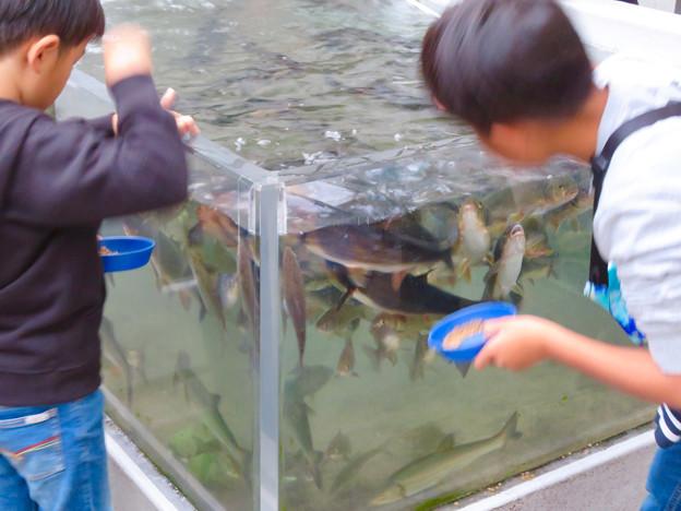 アクア・トトぎふ No - 239:魚の餌やり体験