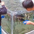 Photos: アクア・トトぎふ No - 239:魚の餌やり体験