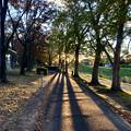 Photos: 木々の間で輝く夕日(2019年11月)- 1