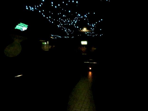 東山動植物園 自然動物館の夜行性エリア - 4