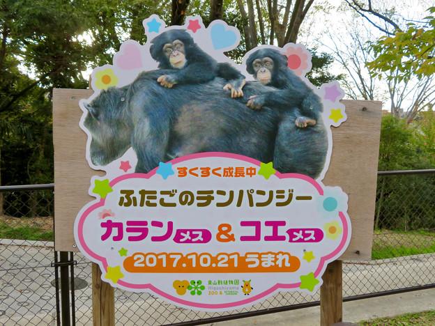 東山動植物園:子育て中のチンパンジーのパネル