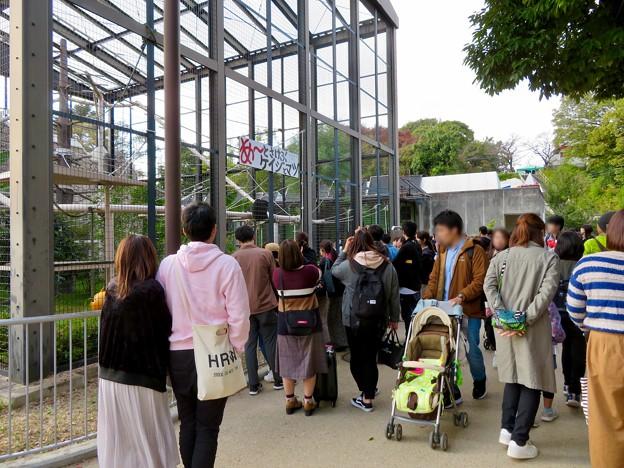 東山動植物園:大人気のフクロテナガザル - 1