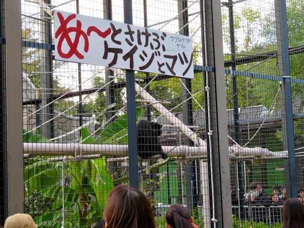 東山動植物園:大人気のフクロテナガザル - 2