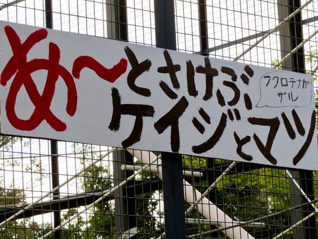 東山動植物園:大人気のフクロテナガザル - 3