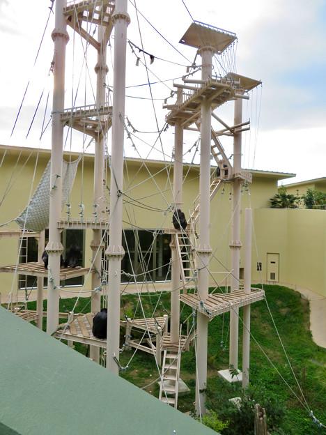 東山動植物園:珍しく外で遊んでたチンパンジー - 3