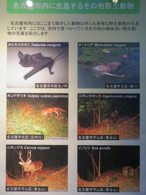 東山動植物園:名古屋市内にいる野生動物 - 3(様々な動物)