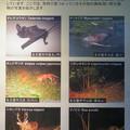 Photos: 東山動植物園:名古屋市内にいる野生動物 - 3(様々な動物)