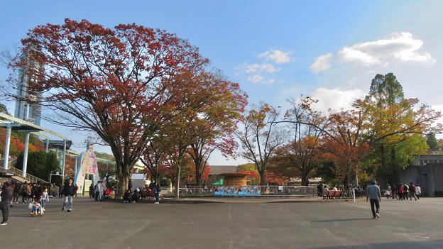 東山動植物園の紅葉(2019年11月16日)- 2