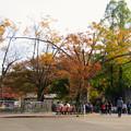 Photos: 東山動植物園の紅葉(2019年11月16日)- 3