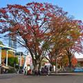 Photos: 東山動植物園の紅葉(2019年11月16日)- 4