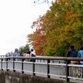 東山動植物園の紅葉(2019年11月16日)- 5