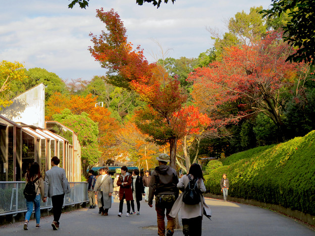 東山動植物園の紅葉(2019年11月16日)- 6