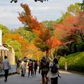 Photos: 東山動植物園の紅葉(2019年11月16日)- 6