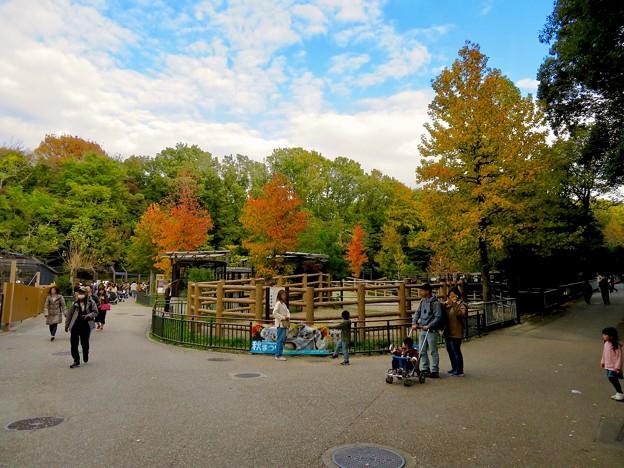 東山動植物園の紅葉(2019年11月16日)- 7