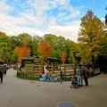 Photos: 東山動植物園の紅葉(2019年11月16日)- 7