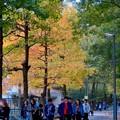 東山動植物園の紅葉(2019年11月16日)- 8