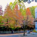東山動植物園の紅葉(2019年11月16日)- 9