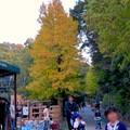 Photos: 東山動植物園の紅葉(2019年11月16日)- 10
