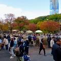 東山動植物園の紅葉(2019年11月16日)- 11