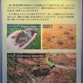 東山動植物園内で見つかったモグラ類
