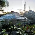 保存修理工事中の東山動植物園の温室(2019年11月16日)- 9