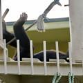 Photos: 東山動植物園:珍しく外で遊んでたチンパンジー - 10