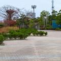 桃花台線の桃花台中央公園南側撤去工事(2019年11月24日)- 12