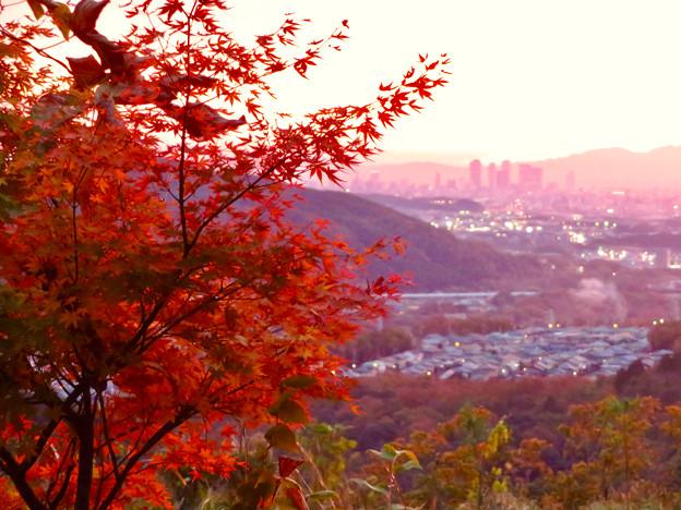 定光寺展望台から見た夕暮れ時の景色 No - 18:紅葉越しに見た景色