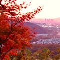 Photos: 定光寺展望台から見た夕暮れ時の景色 No - 18:紅葉越しに見た景色