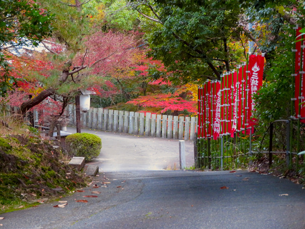 犬山善光寺 No - 15:坂の上から見下ろした参道