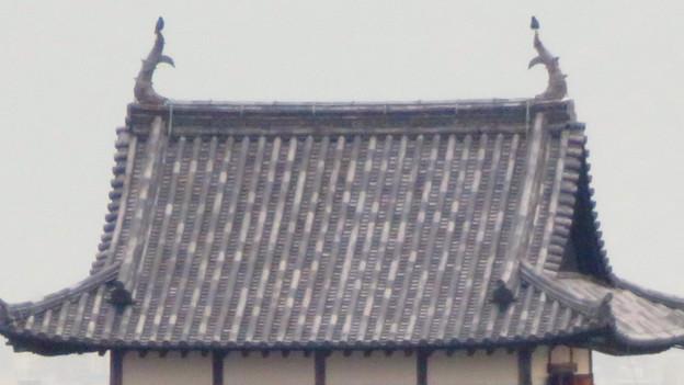 犬山善光寺の開けた所から見えた景色 No - 13:犬山城のシャチホコの上に止まってるカラス