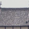Photos: 犬山善光寺の開けた所から見えた景色 No - 13:犬山城のシャチホコの上に止まってるカラス