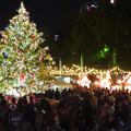Photos: 夜の名古屋クリスマスマーケット 2019 No - 8