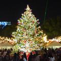 Photos: 夜の名古屋クリスマスマーケット 2019 No - 26
